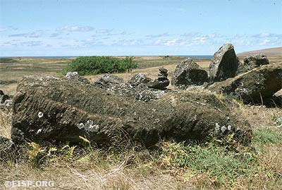 Moai 20-001-013 in situ at Ahu O'Pepe. ©1987 EISP/JVT/Photo: D. C. Ochsner.