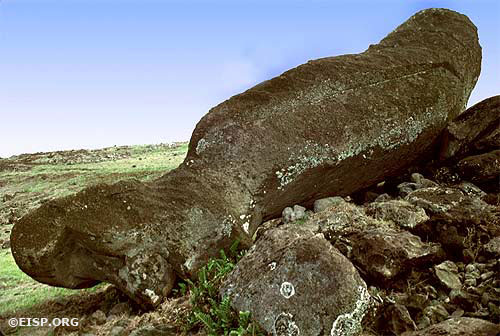 Moai 07-581-001, which fell in the process of being moved to or raised on the ahu. © 1989 EISP/JVT/Photo: D. C. Ochsner.