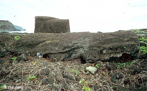 Prone Moai 14-548-009 on the unrestored site of Ahu Tongariki. The ahu was destroyed by a tsunami in 1960. © 1984 EISP/JVT/Photo: D.C. Ochsner.