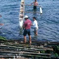 Niko Haoa and Darus Ane (rear) demonstrating the traditional Polynesian canoe ladder we used to modify our moai transport A-frame. ©1998 EISP/JVT/Photo: J. Van Tilburg.