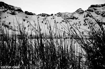 Totora reeds circling the crater lake on the interior of Rano Raraku, Rapa Nui (Easter Island), 1989. Photo: David C. Ochsner, copyright Jo Anne Van Tilburg/EISP.