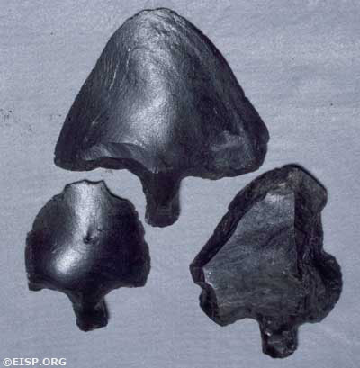 Rapa Nui spearpoints (mata'a), 1983. Photo courtesy Museo Antropological Padre Sebastian Englert (MAPSE), Rapa Nui, (Easter Island).
