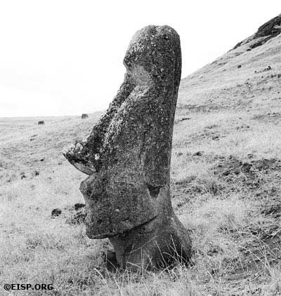 Statue on Rano Raraku Exterior Slopes. (©1983 EISP/JVT/Photo: D. C. Ochsner.)